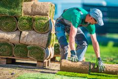 Natural Grass Turf Installer Stock Image