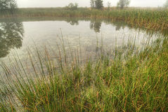 Natural grass wetlands Stock Image