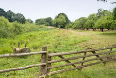 Natural Grassland in Germany Royalty Free Stock Photography