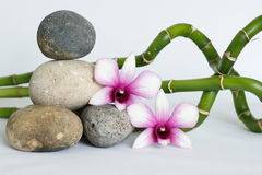 Natural gray pebbles arranged in zen lifestyle with two bicoloured orchids on the right side of bamboo twisted on white background. Natural pebbles arranged in royalty free stock images