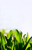 Natural green. Background with selective focus Stock Photography
