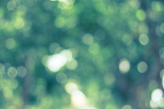 Natural green abstract background Stock Image