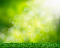 Natural green background Stock Image