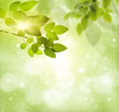 Natural green background Stock Photography