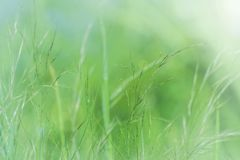 Natural green background abstract, meadow royalty free stock photos