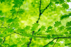 Natural Green Background Royalty Free Stock Image