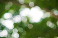 Natural green background with bokeh circles Lizenzfreies Stockbild