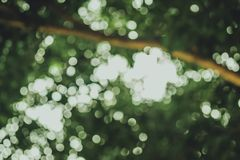 Natural green background with bokeh circles Stockfoto