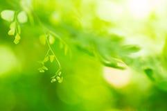 Natural green Royalty Free Stock Images