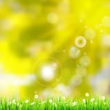 Natural green background. EPS 10 Stock Images