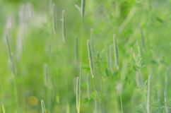 Summer green background Royalty Free Stock Photography