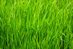 Natural green background. Royalty Free Stock Photo