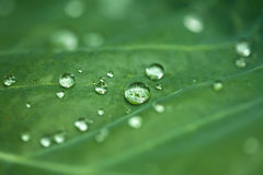 Natural green background with leaf and drops of water Stock Photography
