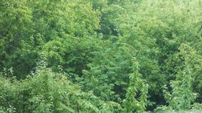 Natural green background - rain in the forest stock video footage