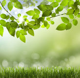 Natural green background with selective focus Stock Photos