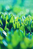 Natural green background with selective focus Royalty Free Stock Photography