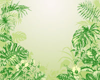 Natural  Green Background with  tropical plants. Stock Photography