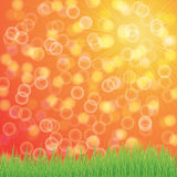 Natural green background with vector sun and grass. Stock Image