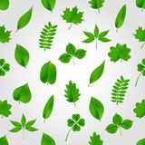 Natural green beautiful leaves icon seamless pattern eps10 Royalty Free Stock Images