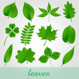 Natural green beautiful leaves icon set  Stock Images