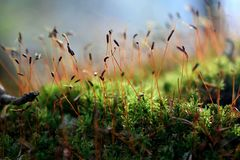 Natural green blooming moss under morning light stock photos