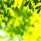 Natural green blur Royalty Free Stock Photography