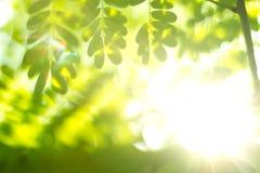 Natural green blur Stock Images