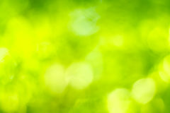 Natural green blur Royalty Free Stock Images