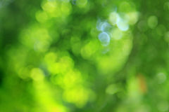Natural green blured background Stock Images