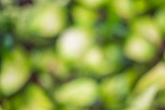 Natural green blurred background. Natural green with blurred background Stock Image