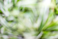 Natural green blurred background. Stock Image