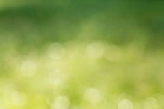 Natural green blurred background Stock Photography