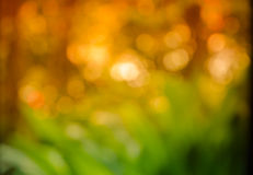 Natural green blurred background. Royalty Free Stock Image