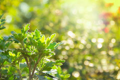 Natural green blurred background. Green blur and bokeh. Royalty Free Stock Photography