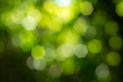 Natural green blurred background Stock Images