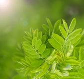 Natural green blurred background, soft focus stock image