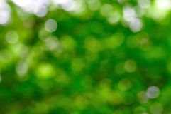 Natural green blurred background. Texture Stock Image