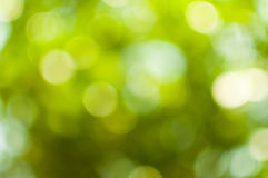 Natural green blurred Royalty Free Stock Photography