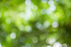 Natural green Bokeh background,Abstract backgrounds. Stock Images
