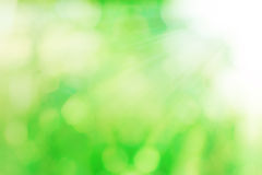 Natural green bokeh with suy ray for background Stock Photo