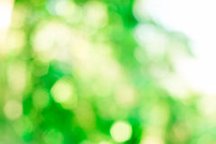 Natural green bokeh from tree Royalty Free Stock Image