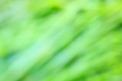 Natural green bright blur background. Royalty Free Stock Photography