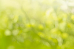Natural green bright blur background Royalty Free Stock Image