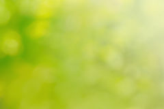 Natural green bright blur background Stock Photos