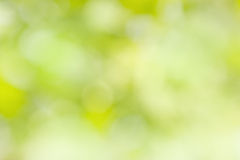 Natural green bright blur background Stock Image