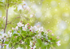 Natural green bright blur background of sunny summer forest Stock Photos