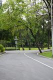 Green bike lane in the park. Natural green and calm bike lane in the park around with many tree stock photos