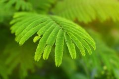 Natural green eco background with leaves. Stock Photography
