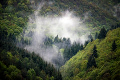 Natural green foggy forest Stock Photos
