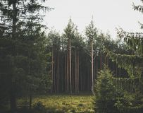 Natural green forest Stock Image
